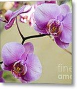 Tropical Radiant Orchid Flowers Metal Print