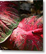 Tropical Rain - Botanical Art By Sharon Cummings Metal Print
