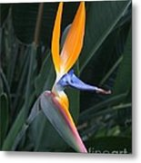 Tropical Touch Metal Print