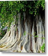 Tropical Tree Metal Print