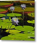 Tropical Water Lily Flowers And Pads Metal Print