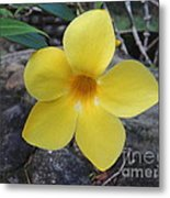 Tropical Yellow Flower Metal Print