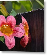 Trumpet Vine With Friend Metal Print