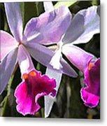 Trumpeting Purple Cattleya Orchids Metal Print