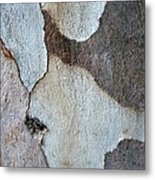 Trunk Of A Eucalyptus Tree  Metal Print