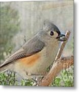 Tuffted Titmouse Early Spring Metal Print