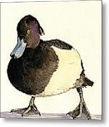 Tufted Duck Metal Print