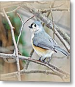Tufted Titmouse - Baeolophus Bicolor Metal Print