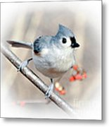 Tufted Titmouse Love  Metal Print