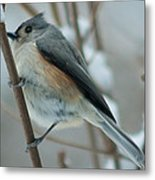 Tufted Titmouse Male Metal Print