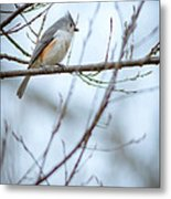 Tufted Titmouse Metal Print