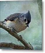 Tufted Titmouse With Snowflake Decorations Metal Print