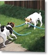 Tug-o-war Metal Print by Karen Elkan