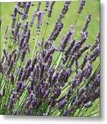 Tuilieres Lavender Metal Print