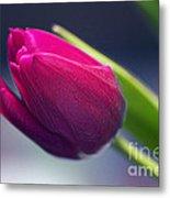 Tulip 2a Metal Print