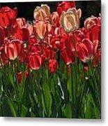 Tulip Bunch Metal Print