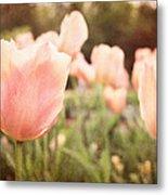 Tulip Dreams Metal Print