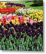 Tulip Field 1 Metal Print