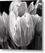 Tulip Flowers Black And White Metal Print