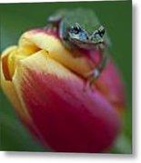Tulip Frog Metal Print