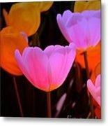 Tulip Glow Metal Print