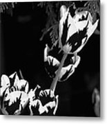 Tulip Group In Black And White Metal Print
