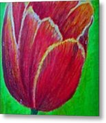 Tulip In Bloom Metal Print by Kat Poon