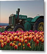 Tulip Morning Metal Print