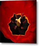 Tulip On Black Metal Print