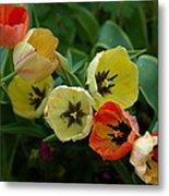Tulip Parade Metal Print