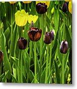 Tulip Race Time Metal Print