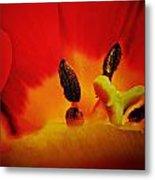 Tulip Sexuality Metal Print