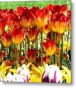 Tulip Stand In Mount Vernon Washington Metal Print