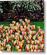 Tulip Stripe Garden Metal Print
