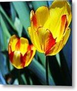 Tulip Sun Burst Metal Print