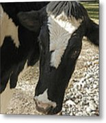 Tulip The Cow Metal Print