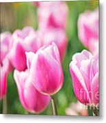 Tulip Time Metal Print by Angela Doelling AD DESIGN Photo and PhotoArt