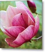 Tulip Tree In Bloom Metal Print