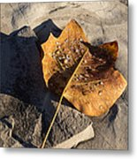 Tulip Tree Leaf - Frozen Raindrops In The Sunshine Metal Print
