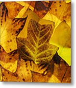 Tulip Tree Leaves In Autumn Metal Print