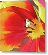 Tulip Warm Tones Metal Print