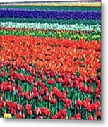 Tulipomania Metal Print by Benjamin Yeager