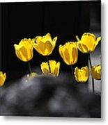Tulips 6077 Metal Print
