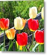 Tulips Aglow Metal Print by James Hammen