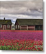 Tulips And Barns Metal Print