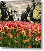 Tulips And Building Metal Print
