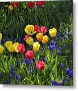 Tulips And Grape Hyacinths Metal Print