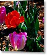 Tulips. Arlington Cemetery Metal Print