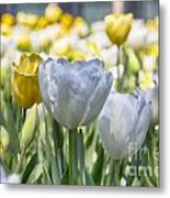 Tulips At Dallas Arboretum V28 Metal Print