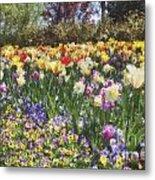 Tulips At Dallas Arboretum V33 Metal Print